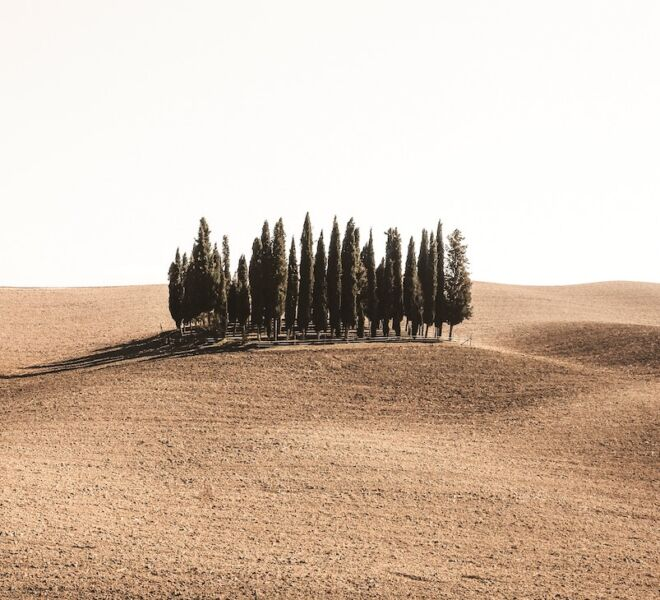 guided tour of Tuscany: cypresses