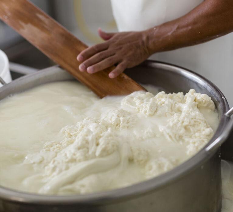 Degustazione formaggi: caseificio in toscana